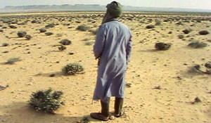 1980 Film score – De meester en de reus